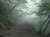 Spooky Aokigahara Forest