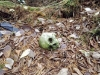 Skull resting in the Aokigahara Forest