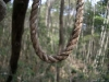 Noose in the Aokigahara Forest